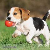 Dog Walker, Pet Sitter in Woodridge