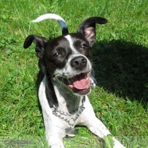 Pet Care Provider Chelsea C's Profile Picture