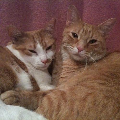 Pet Care Job Brenda Chappell's Profile Picture