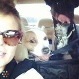 Dog Walker, Pet Sitter in Utica