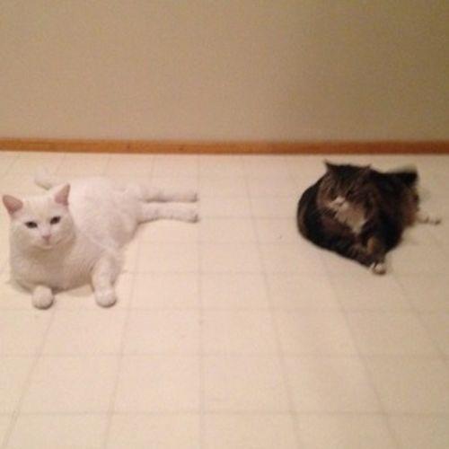 Pet Care Provider Tabitha M's Profile Picture