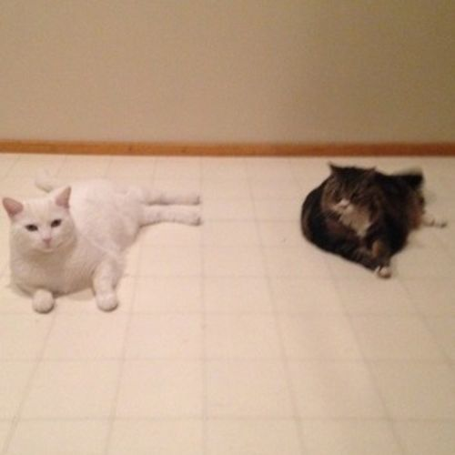 Pet Care Provider Tabitha Mann's Profile Picture