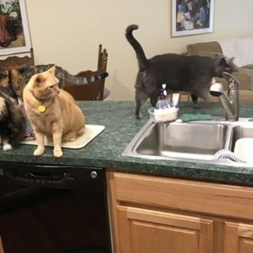 Pet Care Job Calvin H's Profile Picture