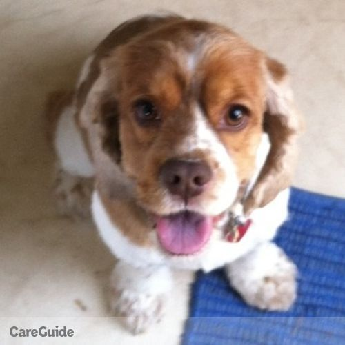 Pet Care Job Thomas A's Profile Picture