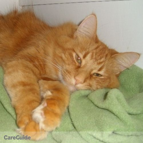 Pet Care Job Laura Schaefer's Profile Picture