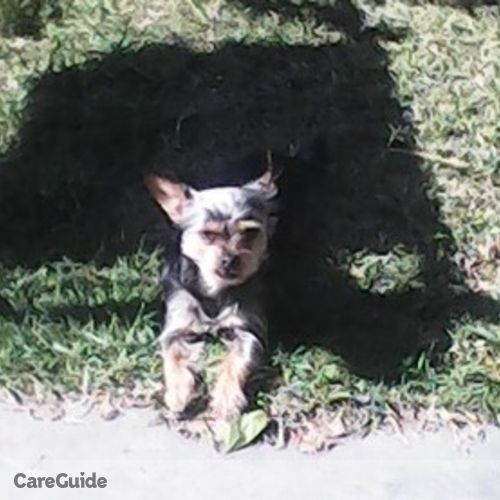 Pet Care Provider Danielle R's Profile Picture