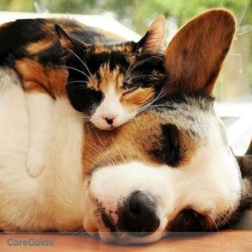 Pet Care Provider Cai Davis's Profile Picture