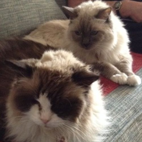 Reliable Cat Sitter Needed in Lahaina, Maui - Pet Sitter Job in