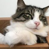We have four cats and two guinea pigs and are looking for someone who can come twice a day to take care of our animals.