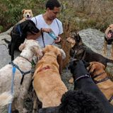 Experienced dog walker and care provider. I specialize in larger and younger dogs with long, active walks and hikes.