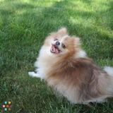 Dog Walker, Pet Sitter in Medford