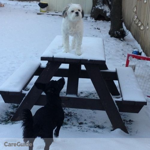Pet Care Provider Ashley K's Profile Picture