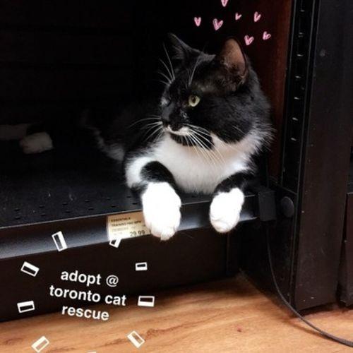 Pet Care Provider Angela Benedicto Gallery Image 2