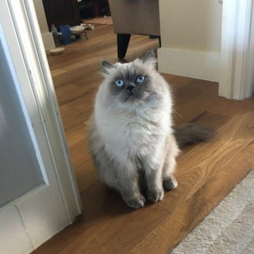 Pet Care Job Jennifer S's Profile Picture