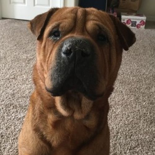 Pet Care Provider Amanda Seigler Gallery Image 2