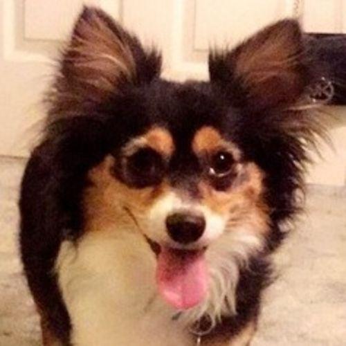 Pet Care Job Rachel W's Profile Picture