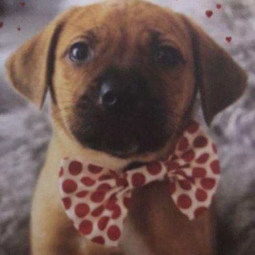 Pet Care Provider Linda G's Profile Picture