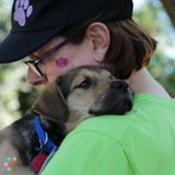 Dog Walker, Pet Sitter in Bellingham