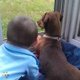 Dog Walker, Pet Sitter in Kernersville