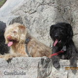Pet Sitter in Carlsbad