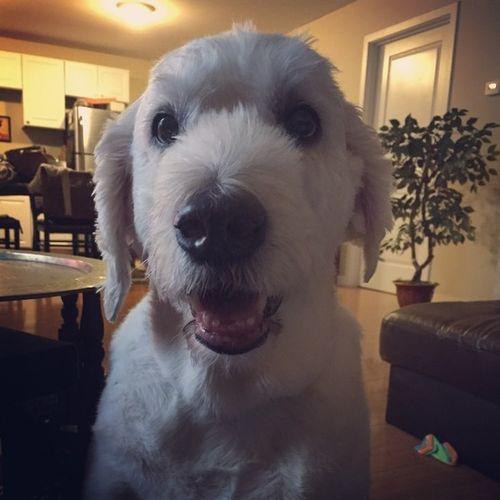 Pet Care Job Anne Brassell's Profile Picture