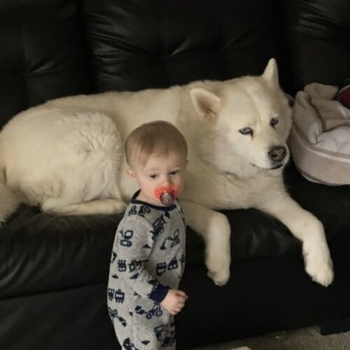 Pet Care Provider Ryan M's Profile Picture