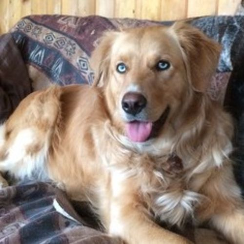 Pet Care Job Tina C's Profile Picture