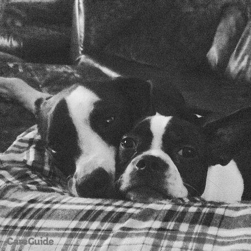 Pet Care Provider Shana O'Brien's Profile Picture