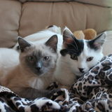 Reliable and loving house sitter needed for frequent stays with two sweet kitties- This is UNPAID