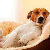 PuppyPower- Holistic & Sustainable dog sitting