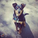 Dog Walker, Pet Sitter in Floyd