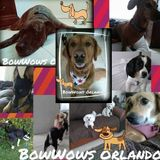 "BowWOWs Orlando ""Where your dog goes to play when you go away!"""