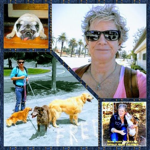 House Sitter Provider Betsy Johnston's Profile Picture