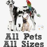 Pet sitter full availability 24/7