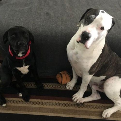 Pet Care Provider Madelyn Webster Gallery Image 3