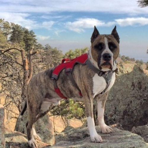 Pet Care Job Taylor Graham's Profile Picture