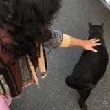 Loving Pet Sitter in Victoria
