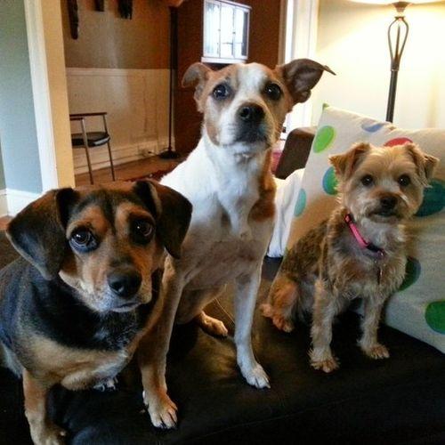 Pet Care Provider Mark McInerney Gallery Image 3
