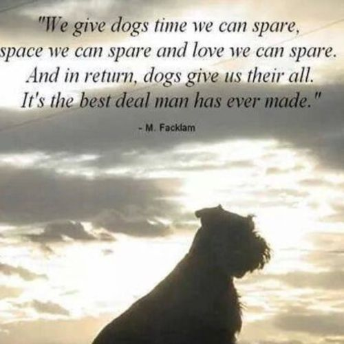Pet Care Provider Charlotte Garron's Profile Picture