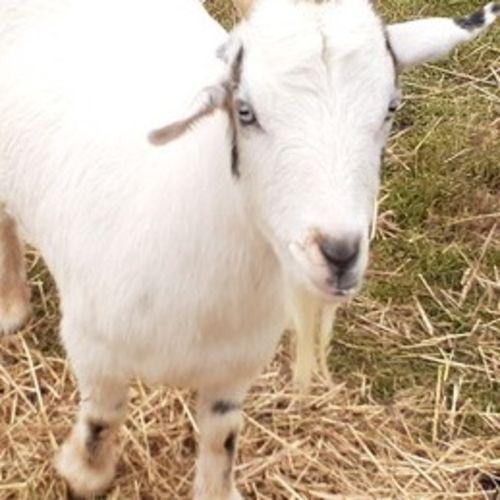 Pet Care Provider Amy P's Profile Picture