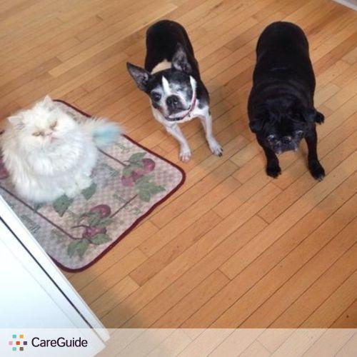 Pet Care Provider Angela C's Profile Picture
