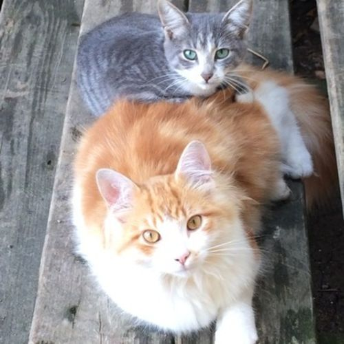 Pet Care Provider Sarah V Gallery Image 1