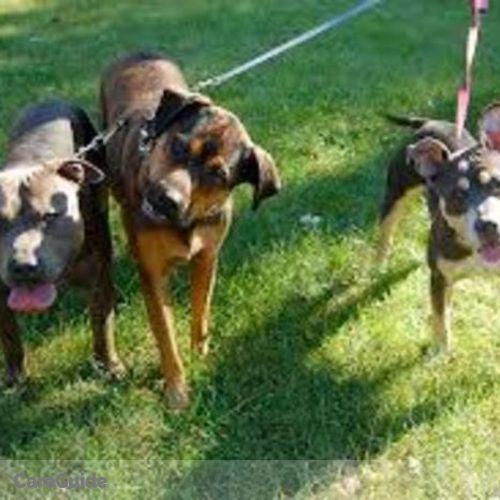 Pet Care Provider Evans Zininga's Profile Picture