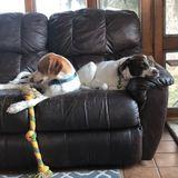 Ewing, New Jersey Pet Sitter Opportunity Week of 4/15 - 4/19