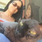 Request for Pet Care 2X Day - Hairless Care