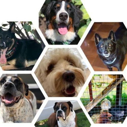 Pet Care Provider Pamela R Gallery Image 1