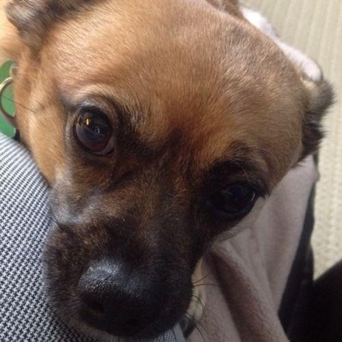 Pet Care Provider Patricia Rew Gallery Image 2