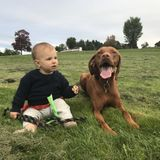Help exercising a very sweet vizsla in off leash areas (pick up Brookline, MA)