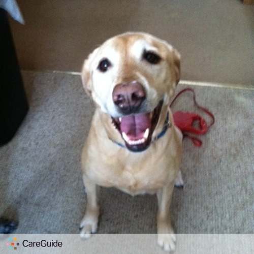 Pet Care Provider Heather Hackett's Profile Picture