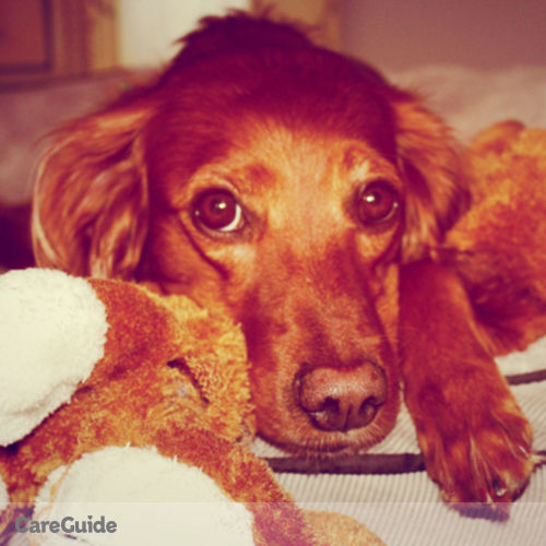 Pet Care Provider Julie Dalton's Profile Picture